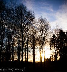 Winter Light (broadswordcallingdannyboy) Tags: selborne hampshire village autumn fall walk eos7d 1740mm light trees leaves autumncolour copyrightleonreillyphotography winter sunset twilight hants 7d sparkle sunlight vista winterlight donotcopy