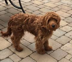 Gabby's handsome Ripley!