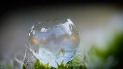 Frozen soap Bubble (✵ΨᗩSᗰIᘉᗴ HᗴᘉS✵66 000 000 THXS) Tags: frozensoapbubble frost glace gel bubble macro hensyasmine namur belgium wallonie europa aaa بلجيكا belgique namuroise proxi belga info look photo friends bélgica ベルギー белгия բելգիա belgio 벨기에 belgia бельгия 比利时 bel be ngc saariysqualitypictures wow yasminehensinterst intersting interestingness eu fr greatphotographers lanamuroise 7dwf