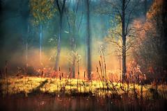 Autumn Woods (LupaImages) Tags: woods forest bush trees autumn fall seasons leaves orange mist fog outdoors outside misty cool dew