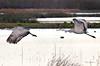 Morning Birds Tele 11 (Dave Skinner Photography) Tags: cosumnes river preserve sunrise birds heron egret cran clouds bridge swan almonds road 500mm winter birding