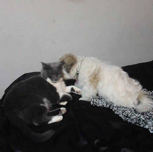 Came across this picture the other day of Willow looking after Kara when she was a pup