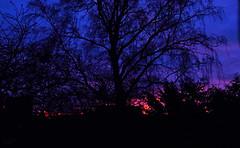 Sunset 16/12/17 (Luzon Jim) Tags: sunset outdoor december month year sky orange tree dusk evening