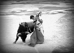 remate (aficion2012) Tags: arles goyesca goyesque septembre 2017 el juli corrida feria du riz bull bullfight toro taureau bw monochrome torero matador toreador tauromaquia tauromachie