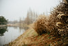07837 (New unicorn) Tags: landscape scenery scene sky peaceful photography place path park tranquility tree travel weather weed winter water refelction beautiful bank plant river grass