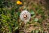 ILCE-7M2-09948-20180116-1237 // Vivitar MC Close Focus Wide Angle 28mm 1:2 (Otattemita) Tags: 28mmf20 florafauna vivitar vivitarkomine vivitarmcclosefocuswideangle28mmf20 fauna flora flower nature plant wildlife vivitarmcclosefocuswideangle28mm12 sony sonyilce7m2 ilce7m2 28mm cnaturalbnatural ota