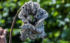 2017 - Regent Cruise - Grenada - Dead on the Vine (Ted's photos - For Me & You) Tags: 2017 cropped grenada nikon nikond750 nikonfx regentcruise stgeorge's tedmcgrath tedsphotos vignetting bokeh leaf dead deadleaf driedleaf
