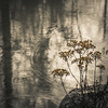 Faded Beauty (keith_shuley) Tags: water creek stream twigs sticks weeds reflections