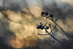 February bokeh. (agnieszka.a.morawska) Tags: winter manualfocus manuallens oldlens helios44m helios44 helios nature dof art sunset bkhq beyondbokeh bokehlicious bokeh