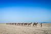 Afar, Ethiopia (gstads) Tags: afar danakil danakildepression ethiopia ethiopian africa african salt camel camels saltmine cameltrain moonscape saltmining