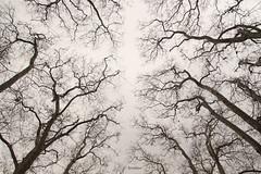 Gülhane Parkı (rukiyekaya) Tags: gülhane park ağaç kış fall istanbul winter byrukiye canon tamron turkey takephoto thesky tree trees türkiye peace sky ağaçdalı view gökyüzü huzur history