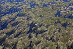 (jc.dazat) Tags: cygne swan solitude extérieur rivière photo photographe photographie photography canon jcdazat
