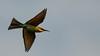 NA5_1646.jpg (naser7363) Tags: chestnutheadedbeeeater birds