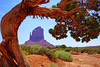 Picturesque crooked pine tree, Monument Valley, USA (Andrey Sulitskiy) Tags: usa monumentvalley arizona