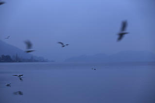 Agitated Birds Flying Faster than Shutter Speed