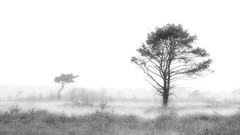 Low hanging mist makes a beautiful day! (Jochem.Herremans) Tags: bomen kalmthoutseheide mist monochroom natuur water wit zwart landscape monochrome bird nature white background morning serene silhouette tree painting season flying black natural sky peaceful outdoor misty serenity beautiful scenery winter wind fog art travel spring abstract leaf wood space park environment forest scenic