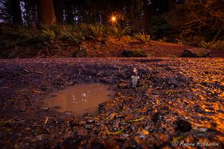 Pothole 8 - Potholes in the Park with Pelon