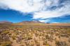 Flores adornando el desierto (rockdrigomunoz) Tags: desierto flore flores naturaleza paisajes
