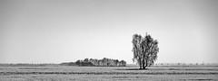 The wide open spaces (++sepp++) Tags: landscape landschaft landschaftsfotografie schnee winter minimalism minimalismus minimal minimalistisch germany bavaria snow bäume trees bayern bw blackwhite monochrom einfarbig sw schwarzweis deutschland