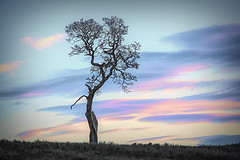 Waiting (Martinionice) Tags: lonely nature tree sunset evening color farm meadow winter january sky clouds spiritual natrual bc victoria metchosin