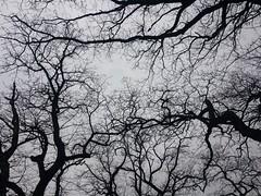 Sky Roots (Giorgi Natsvlishvili) Tags: twisted wrought boughs veins branches trees sky travel photography kakheti georgia