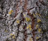 Cork Tree Ravines (sweetpeapolly2012) Tags: alijo portugal northernportugal park corktree tree ravines bark knarled textured lichen