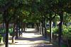 Malaga (hans pohl) Tags: espagne andalousie malaga parcs paysages landscapes arbres trees nature