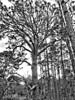 Miramar Pineland Park 08-20180120 (Kenneth Cole Schneider) Tags: florida miramar miramarpinelandpark