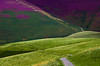 Latrigg layers (snowyturner) Tags: latrigg lakedistrict heather summer layers undulating footpath steep flowers skiddaw cumbria