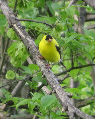 IMG_9249 (stevefenech) Tags: canada ontario stephen steve fenech fennock birds bird