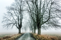 (Femme Peintre) Tags: mönchbruch weg bäume natur nebel outdoor grouptripod