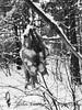 IMG_2499 (@XIII) Tags: apple iphone7 frommypointofview neve snow albero tree foglie foglia leaf leaves alberi rami ramo bnw blackandwhite poland polonia polska biancoenero bw bn snieg bialystok foresta
