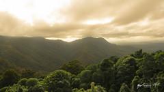Dorrigo National Park (R. Francis) Tags: dorrigo dorrigonationalpark nsw newsouthwales northernnsw midnorthcoast ryanfrancis ryanfrancisphotography