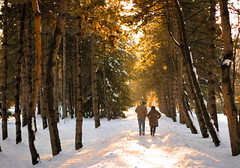Perfect Timing (the girl with the blue scarf) Tags: winter snow path lights sunshine sunset goldenhour trees rays people walk january theaanca
