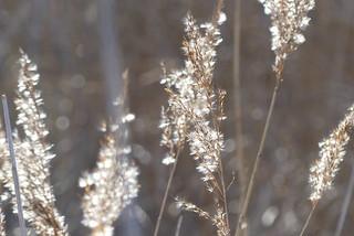 Magical reeds
