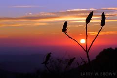 Morning Palette (Larry W Brown) Tags: sunrise blueridgemountains shenandoahnationalpark virginia sumac silhouette appalachia
