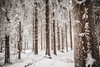Thuringian Forest (Steffen Walther) Tags: steffenwalther friedrichshöhe rennsteig thüringerwald thuringia trees thuringianforest spruce winter ice outdoors canon5dmarkiii sigma35mmart landscape nature germany snow frosty
