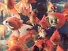 Flower Insect Bird Fish Market (karolajnat) Tags: asia china trip beijing shanghai great wall old town tea pagoda cny iqbal antiques got temple red yuyuan garden jiuqu bridge city bund nanjing road people square tiananmen jade buddha jingan tianzifang orient pearl tower jinmao lujiazui heaven yuanqiu duck forbiddencity hutong silk summer palace mutianyu hainan sane beach maglev