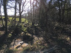 Photo of In withybush woods