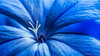 Jazmín Celeste (Rodri Valdez) Tags: macro flowe flower flor flores petalo azul blue polen details detalle detalles cerca closeup close up sony a77ii image