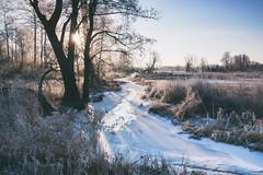 Frozen wonderlad (xkolba) Tags: river floe sunrise riverbank outdoor mood podlasie february landscape winter frost tree canon70d ice grass sky field sun frozen