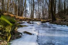 Frozen river (Koberek@) Tags: koberek sulików sony slt 37 poland polska przyroda landscape lower silesia dolnyśląsk wild winter wald river czerwona woda light outdoor