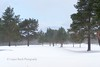 1-3-2018 (Copperhobnob) Tags: snow thebeastfromtheeast winterstorm