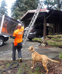 Kenny carrying the chimney cap to the ladder, Rosie watches, carport, Fivestar Chimney, yard, Dash Point Road, Washington, USA (Wonderlane) Tags: 201802271305590 kennycarrysthechimneycaptotheladder rosiewatches carport fivestarchimney yard dashpointroad washington usa kennycarryingthechimneycaptotheladder kenny carrying chimney cap ladder omahhung blessedcap house improvements work orange green brown dog person man renovation
