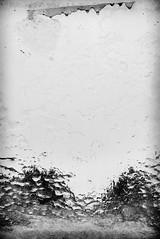Trees (Dave_Davies) Tags: snow ice winter beastfromtheeast storm trees window pane