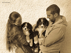 DSC00290 (sportsHUN) Tags: landscape babys dogs puppies portre