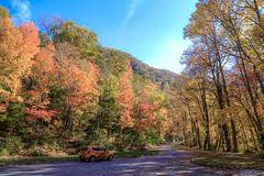 IMG_3560_Smoky Mountains (Alex Hsieh (椰子人)) Tags: ç´è² smokymountains smokymountainsnationalpark greatsmokymountains 2016 fall fallfoliage autumn roadtrip travel tn northcarolina canon canon6d 6d