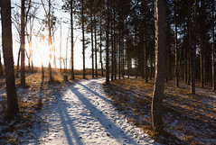 Path of Winter (John Westrock) Tags: nature trees winter forest path trail sun wisconsin midwest retzernaturecenter canoneos5dmarkiii canonef2470mmf28lusm waukesha