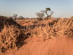 NamibRand (Melvinia_) Tags: olympusomdem1 namibie namibia desert désert namibrand namibrandfamilyhideout sunrise dunes sand