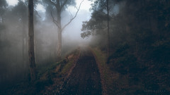 Untitled (Mark McLeod 80) Tags: ballarat dji drone fog mtwarrenheip phantom4pro summer aerial trees dunnstown victoria australia au markmcleod markmcleodphotography